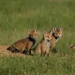 Gli animali della Riserva - Territorio Pian di Spagna