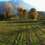 Le nostre coltivazioni Bio fotografate con Drone